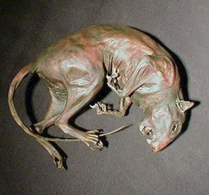 mummified squirrel custom creature taxidermy