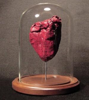 ram heart under glass custom creature taxidermy