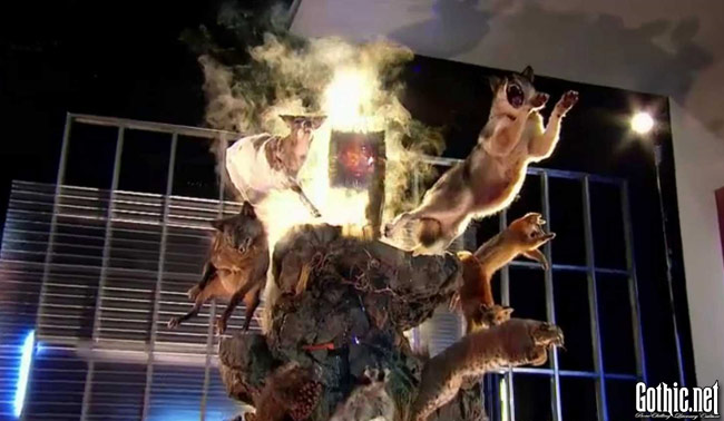 Immortalized 102 Competitive Taxidermy on AMC