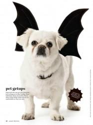 Martha Stewart Halloween Dog Outfit